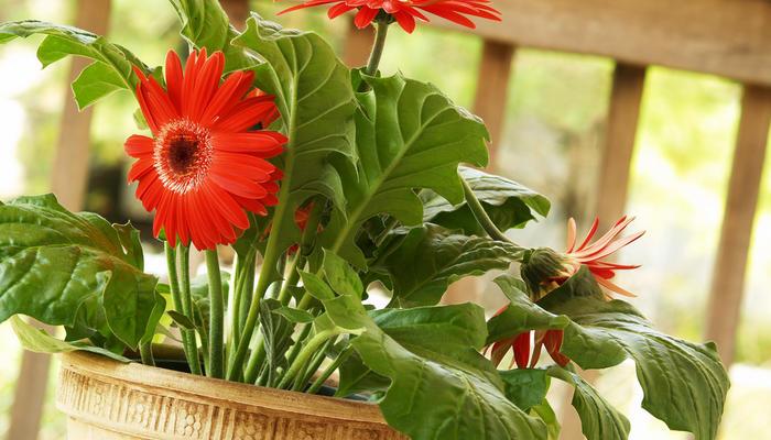 15 комнатных растений, улучшающих воздух