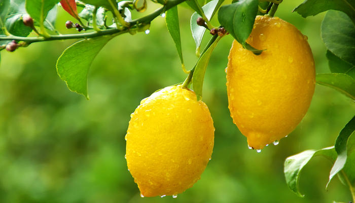 Экзотические фрукты, которые можно вырастить из косточек