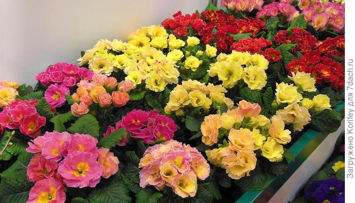 Где и у кого лучше покупать посадочный материал. Часть 1: супермаркеты, садовые центры, питомники и коллекционеры