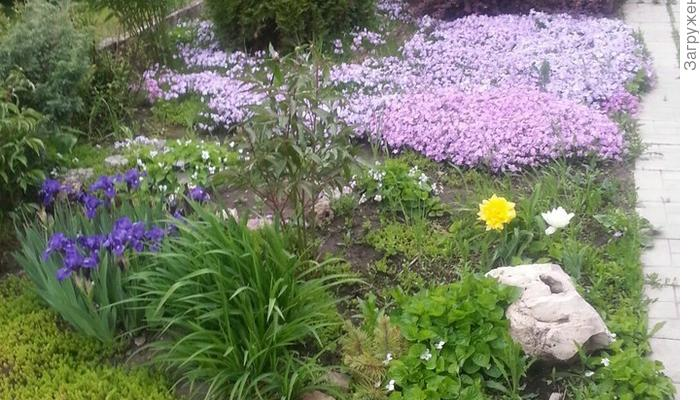 Первое пробуждение весенних красок, май 2017