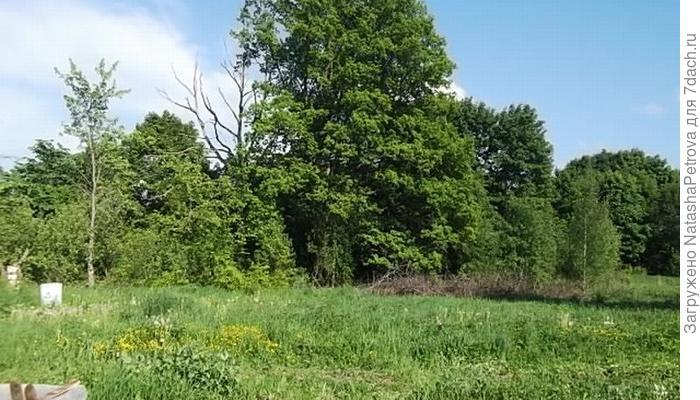 Грядки-короба на моём огороде