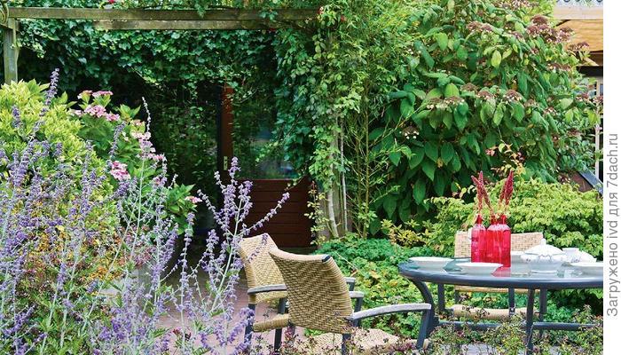 На любой вкус и аромат: создание сада пряно-ароматических растений