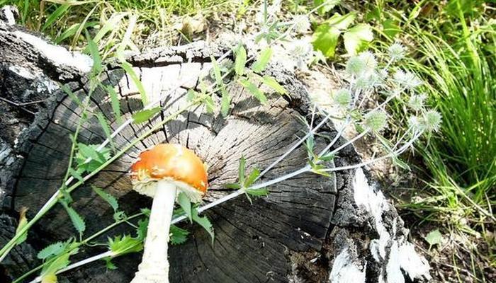Деревья стареют и гибнут