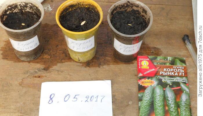 Огурец Король рынка F1. Посев семян
