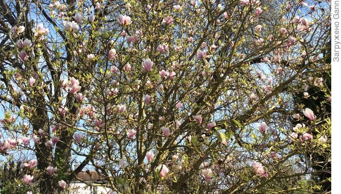 Вся та же весна...