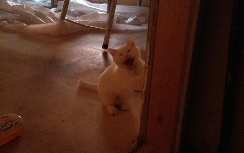 Кошка в экстазе от наших ремонтных подвигов!