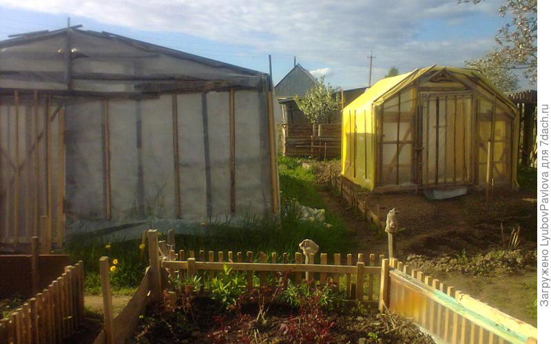 Мои две теплицы. В левой белой я выращиваю томаты. В правой жёлтой выращиваю перцы и баклажаны.