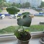 Что это за растение ?