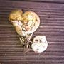 Подскажите, что это за гриб?