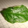 На листьях перца появился налет. Чем больно растение и возможно ли это вылечить?