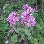 Подскажите, что это за цветы?