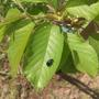 Что это за жуки? Если вредители, то как избавиться?