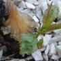 Можно ли возродить вишенку или лучше выкорчевать и посадить новое деревце?