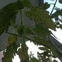 Помогите определить, что с огурцами и помидорами?