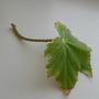 Подскажите название растения. Как оно размножается?