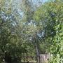 Можно ли закрепить громоотвод на высокой березе рядом с домом?