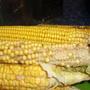Почему выросла кукуруза с редкими зернами?
