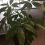 Помогите узнать название этого комнатного растения!