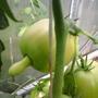 Вот такой Малиновый богатырь.  Кусты мощные, плодов много, все они среднего размера. Устойчивы к засухе, вкусные.