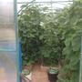 Мой урожай.
