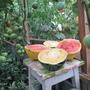 Арбузы бывают разные, Чудо ягода и Ред кристалл — просто объедение.