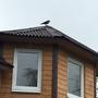 Птицам он тоже нравится
