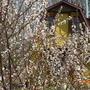 Домик весной, во время цветения плодовых деревьев
