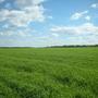Фотографии и отзывы о коттеджном поселке «Фиалкино» (Ступинский р-н МО)