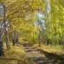 Фотографии и отзывы о коттеджном поселке «Шелестово» (Истринский р-н МО)