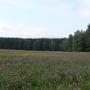Фотографии и отзывы о коттеджном поселке «Костомарово поле» (Чеховский р-н МО)