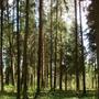 Фотографии и отзывы о коттеджном поселке «Сосны» (Домодедовский р-н МО)