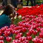 Старые тюльпаны в новой оптике и игра в ассоциации