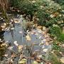 Готовим осенний водоём к зиме: 5 важнейших задач