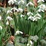 7 цветов Татьянам