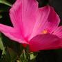 10 растений, цветущих в сентябре