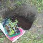 Моя рассадочная яма
