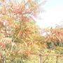 Осенний день на даче.