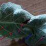 Помогите опознать вредителя яблоневых листьев