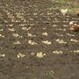 Поиск сорта картофеля по заданным качествам
