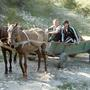 А в деревне - лошади...