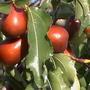 Вопрос по выращиванию экзотических растений