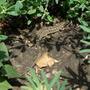 Ящерицы в огороде - кто за, а кто против?