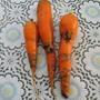 Кто повредил морковь?