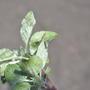 Помогите определить вредителя на яблонях. Почему кора яблонь имеет такой странный вид?