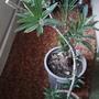 Помогите распознать растение