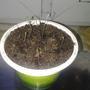 Как часто нужно поливать эпином рассаду чабреца и надо ли?