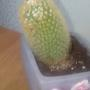 Что с моим кактусом?