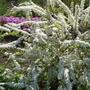 Есть слово волшебное – дача! Есть слово волшебное - сад!