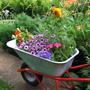 Где и как обустроить контейнерный сад