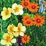 Кто на новенького, или Необычные сорта привычных цветов